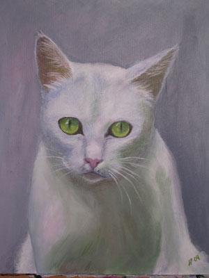 Katse - valkoinen kissa